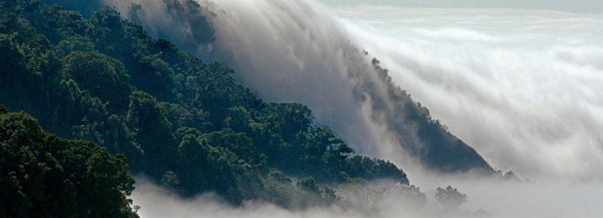 La Reserva de la Biosfera el Triunfo en Chiapas, es un área prioritaria para la conservación de las aves