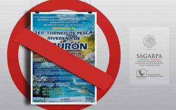 Prohíben torneo de pesca de tiburón blanco en Oaxaca; será solo de especies de escama y con peso límite acumulado