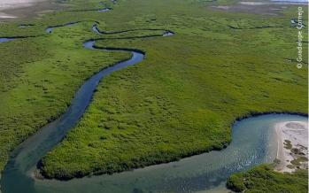 Protegidas 80 mil h en Laguna San Ignacio de la Reserva de la Biosfera El Vizcaíno