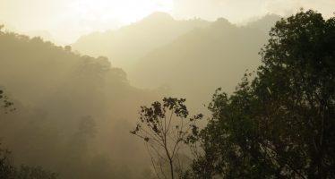 Pronatura Veracruz: VIII Diplomado en Restauración Ecológica de Bosque de Niebla online-presencial en Catepec