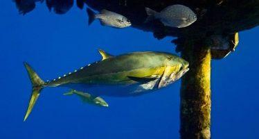 Rechazan diputados de la Comisión de Pesca, minuta que expide la Ley General de Biodiversidad aprobada por el Senado