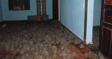 Rescatadas más de 10.000 tortugas en peligro de extinción en Madagascar