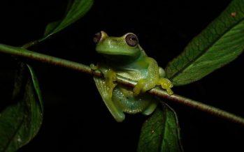 México, quinto lugar en diversidad de anfibios