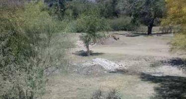 Desmiente Profepa supuesto ecocidio en las riberas del río Fuerte en Ahome, Sinaloa