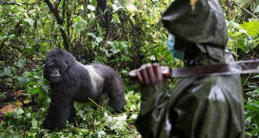 Seis guardabosques de Virunga muertos en el santuario de vida salvaje de la República Democrática del Congo