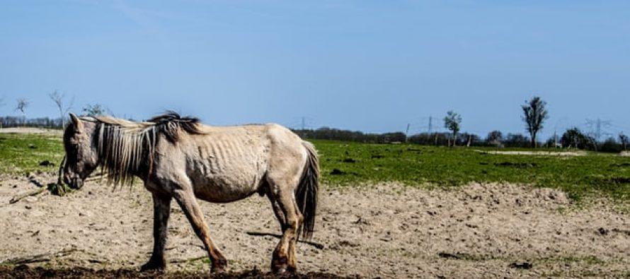 El experimento holandés de reutilización genera reacción violenta ya que miles de animales mueren de hambre