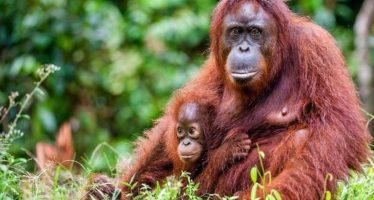 Astro-ecología: salvar animales en peligro con software diseñado para las estrellas