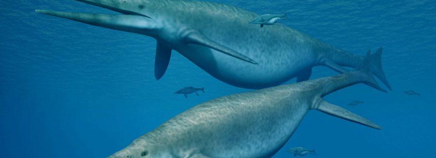 Hallan fósiles del monstruo marino más grande de la prehistoria y resuelven un acertijo de 150 años
