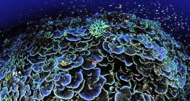 Desarrollan un «escudo solar» para prevenir el blanqueamiento de los corales