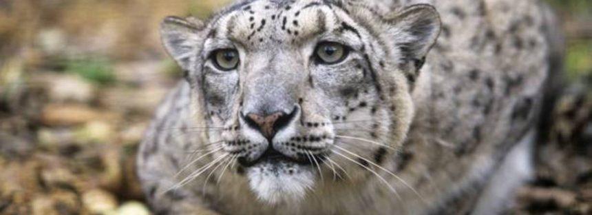 El cambio climático amenaza al 50% de las especies de los lugares más biodiversos del planeta