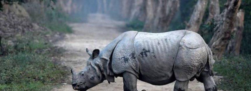India mantiene una saludable población de rinocerontes