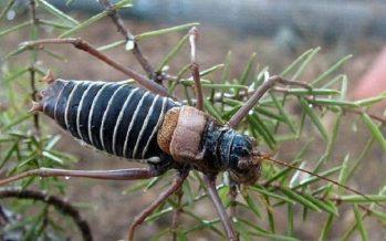 Arranca un censo de insectos en Alemania