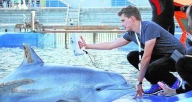 Un ejército de sensores acoplados a animales marinos para explorar los océanos