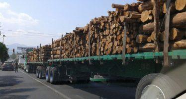 Michoacán no frena la tala ilegal de sus bosques