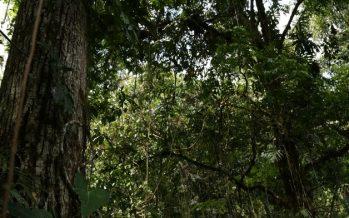 Razones para proteger la Selva Lacandona