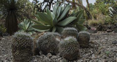 El Jardín Botánico de la UNAM conserva 303 especies de flora en peligro de extinción