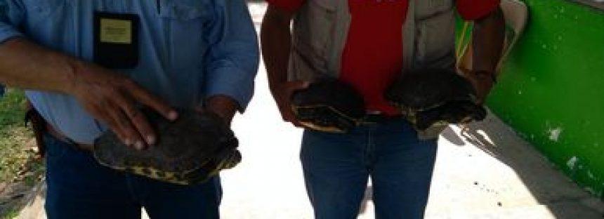 Aseguran aves y tortugas en comunidades de siete municipios y en filtros carreteros de Tabasco