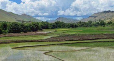 Madagascar: casi la mitad de sus especies de agua dulce están en peligro