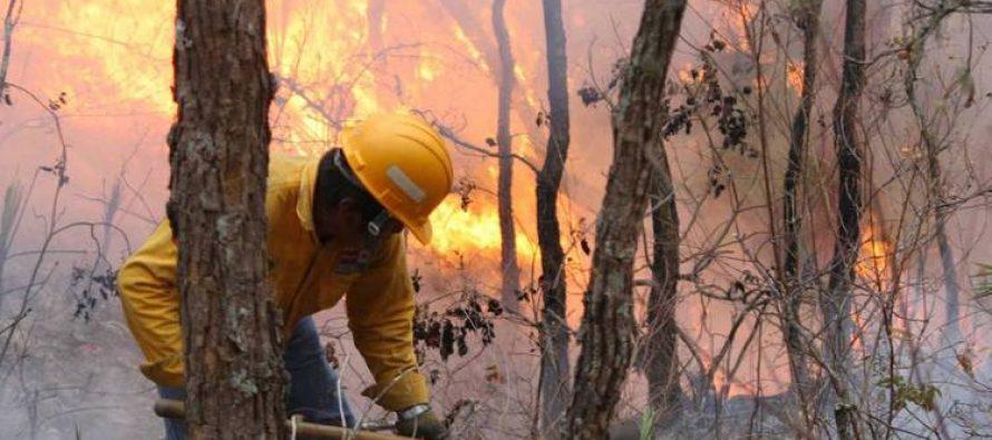 Para prevenir y combatir incendios en México: Programa Nacional de Protección contra Incendios Forestales