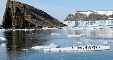 Vídeo: Descubren una «supercolonia» de pingüinos Adelia en la Antártida