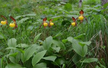 Cada vez más plantas «hacen cumbre» en las montañas debido al cambio climático