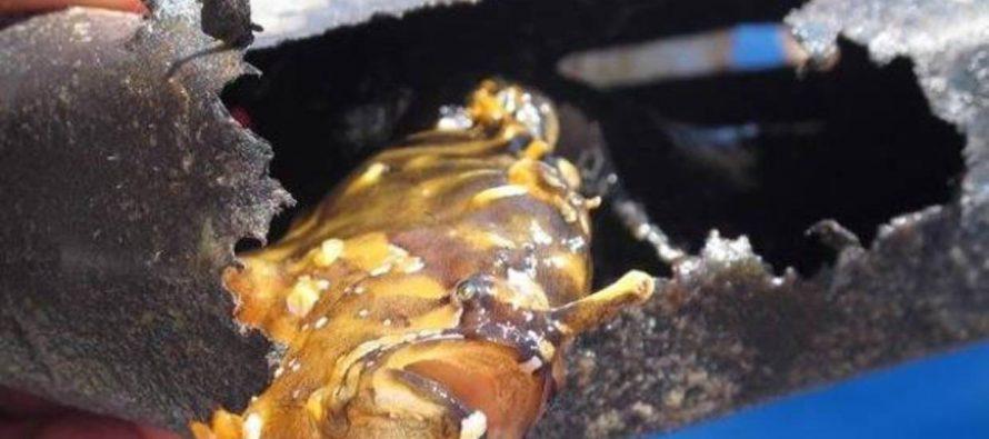 Belice erradicará las bolsas, utensilios y contenedores de plástico desechable en abril de 2019
