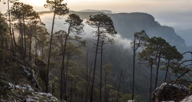 Reserva de la Biosfera Sierra de Manantlán