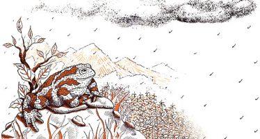 Bobok, el sapo que salvó a los yaquis de la sequía
