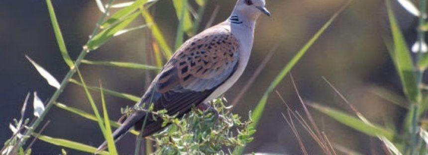 Una de cada ocho especies de aves del planeta está en riesgo de extinción