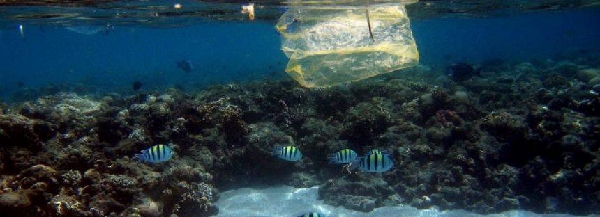 22 de Abril: este Día de la Tierra el Océano se rebela contra el plástico.
