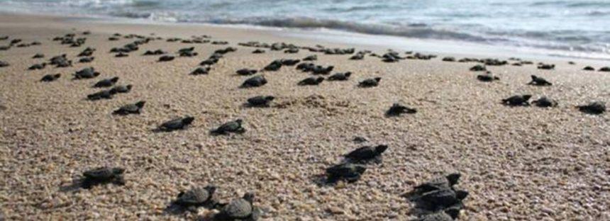¿A qué velocidad y con qué frecuencia se desplazan los animales marinos?