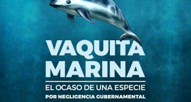 Vaquita Marina, el ocaso de una especie por negligencia gubernamental