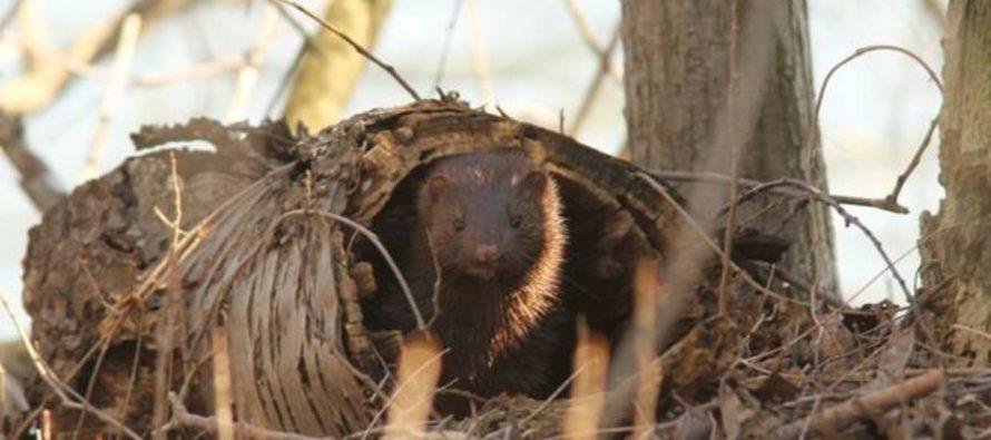 Las especies invasoras son el principal factor de extinción de la biodiversidad