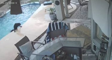 Un perro logra sacar a otro de una piscina