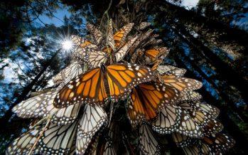 Los científicos advierten que el cambio climático está en camino de causar una gran eliminación de insectos
