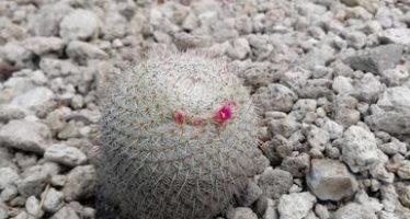 Aseguran 61 ejemplares de cactáceas en Amozoc, Puebla