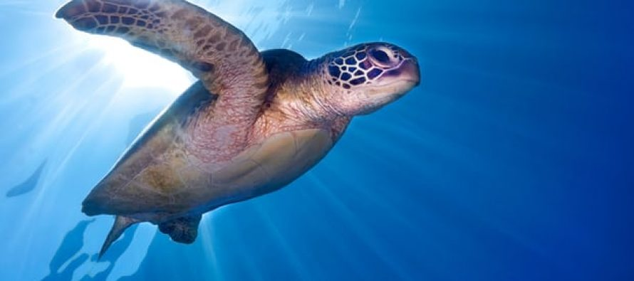Un tercio de las especies amenazadas de Australia no son monitoreadas