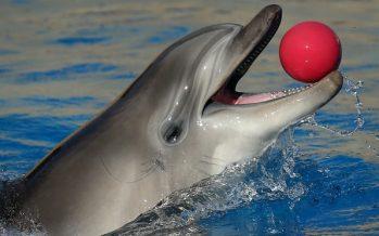 Ucrania dice que los delfines militares capturados por Rusia se declararon en huelga de hambre