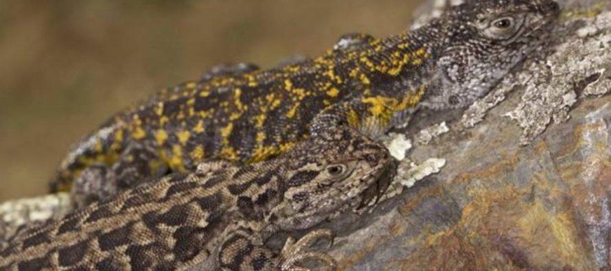 Madidi, un edén de posibles nuevas especies para el mundo