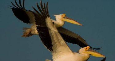 Día Mundial de las Aves Migratorias: combatir el envenenamiento por plomo