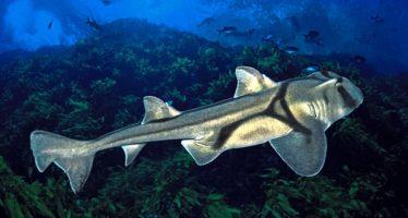 Los tiburones aman el jazz, pero son perplejos por los clásicos, dicen los científicos