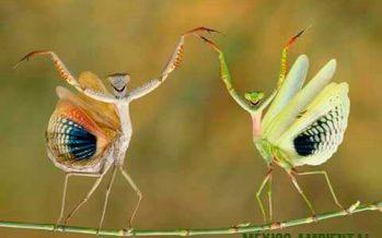 20 grandes fotos de las maravillas de la naturaleza
