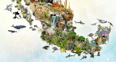 Convenio sobre la Diversidad Biológica (CBD)