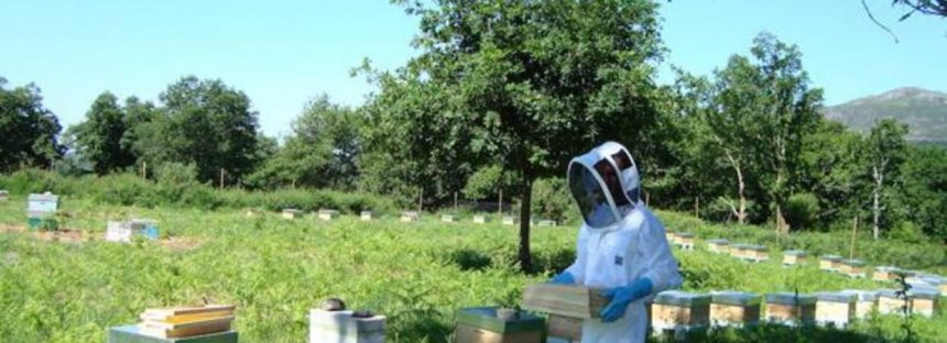 Una cucharada de miel equivale al trabajo de 12 abejas durante toda su vida