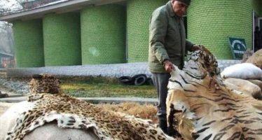 El deseo de tener un animal exótico como mascotas no decrece