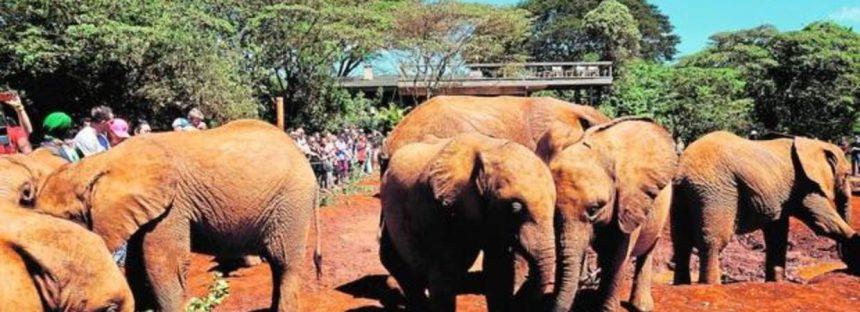 Los elefantes jóvenes se mudan cuando la caza furtiva les arrebata a sus matriarcas