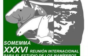 Científicos americanos alertan sobre extinción del manatí del Caribe (Trichechus manatus) por pérdida de hábitat