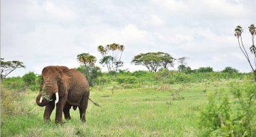 ¿Nos acercamos a la sexta extinción?