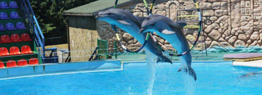 Prohíben animales marinos en espectáculos