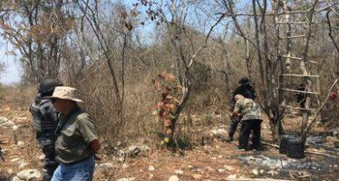 Detectan tala ilegal y ocho cambios de uso de suelo en terrenos forestales en diversos municipios de Colima